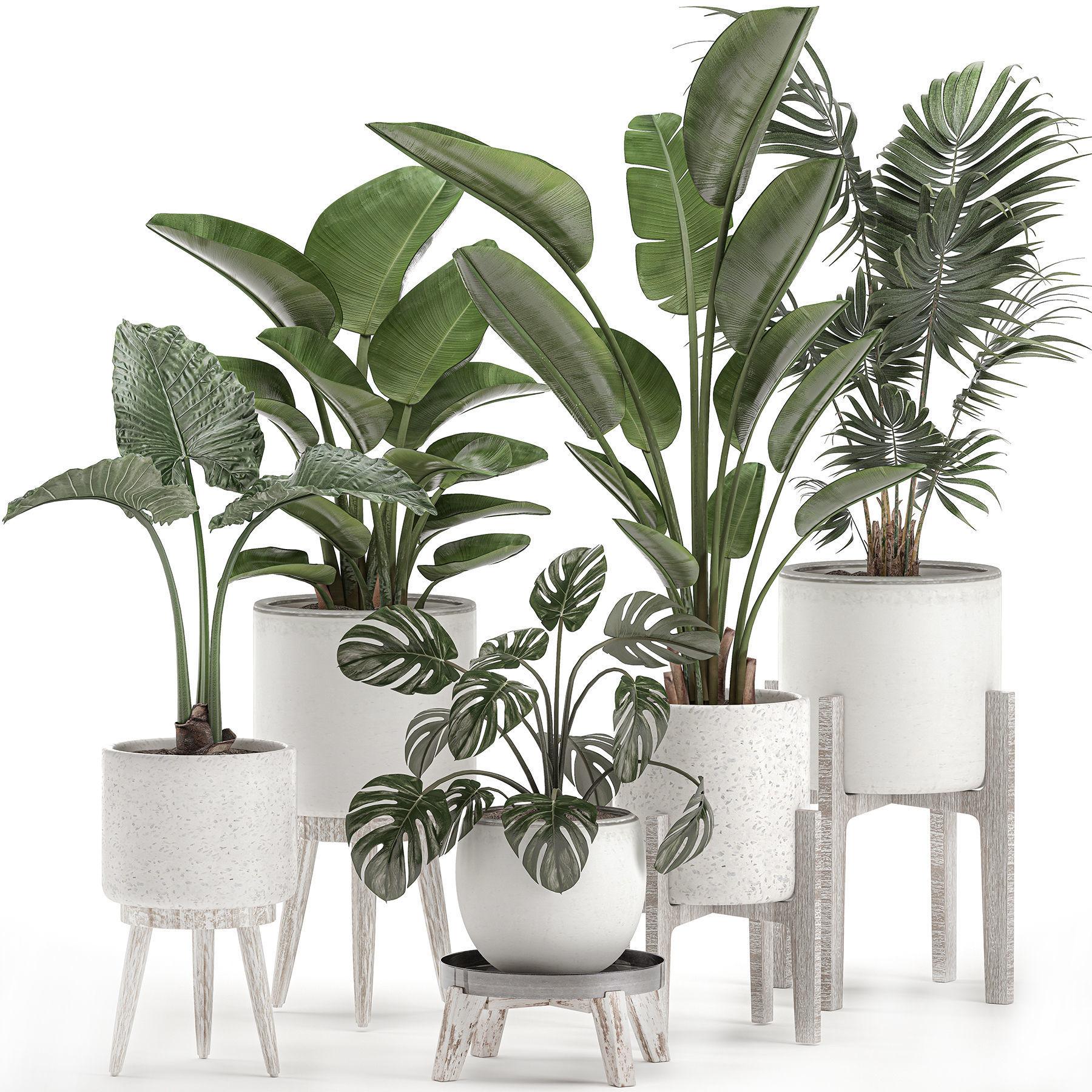 Decorative plants for the interior in white pots 557