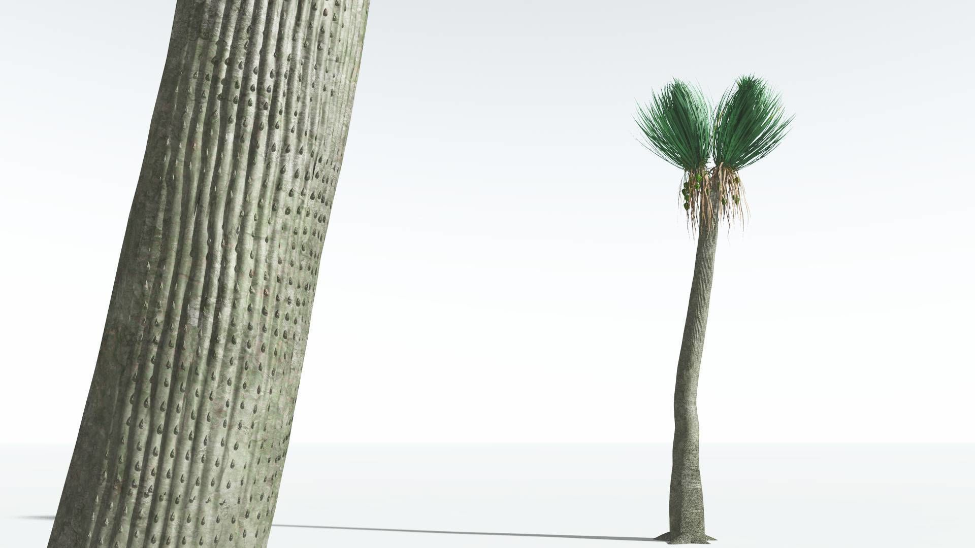 EVERYPlant Ovate Sigillaria 06 --18 Models--