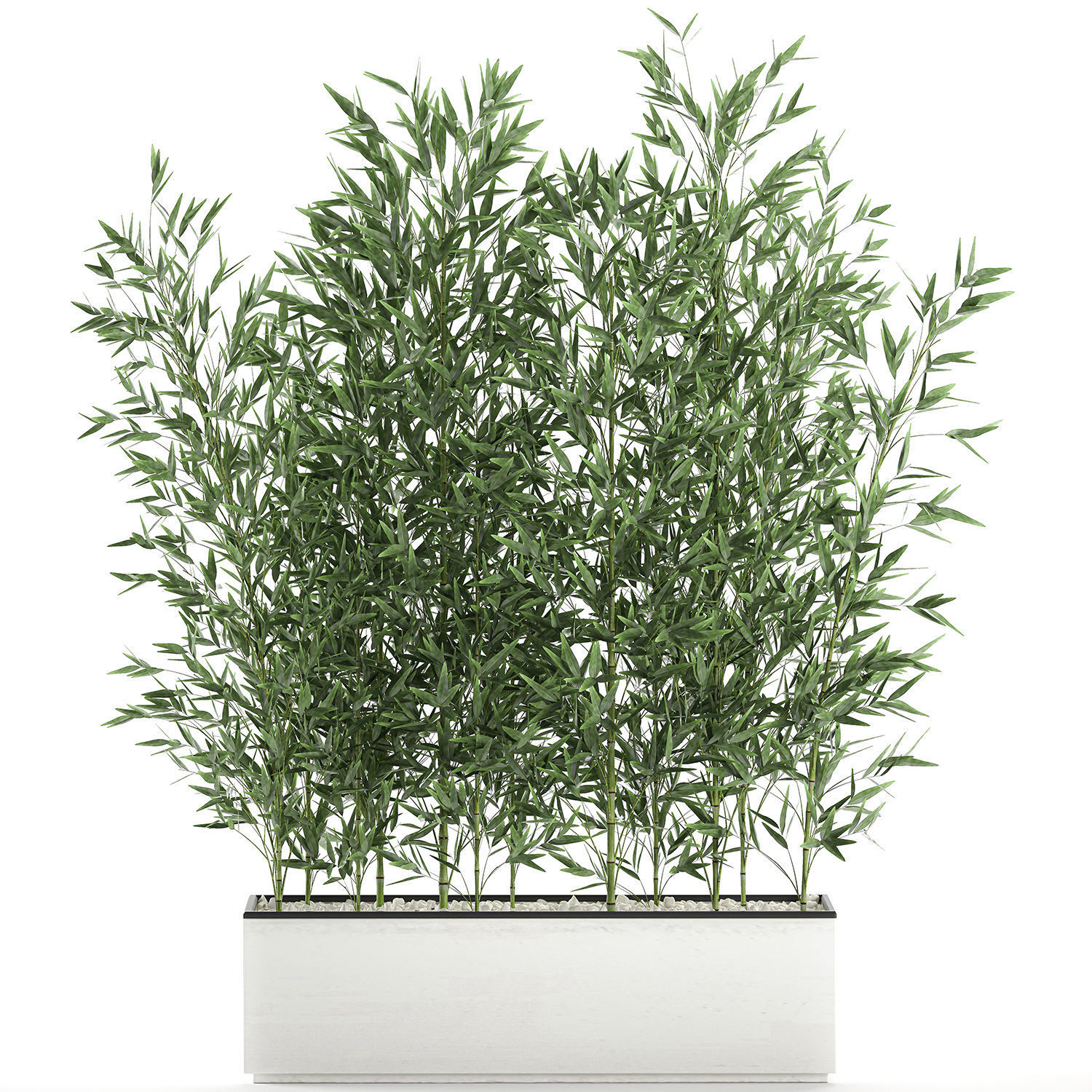 Bamboo bush for the interior in a white flowerpot 579