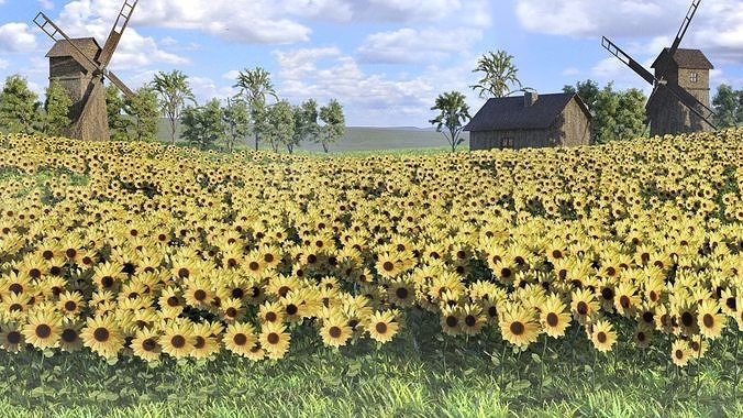 Low poly grass Sunflowers