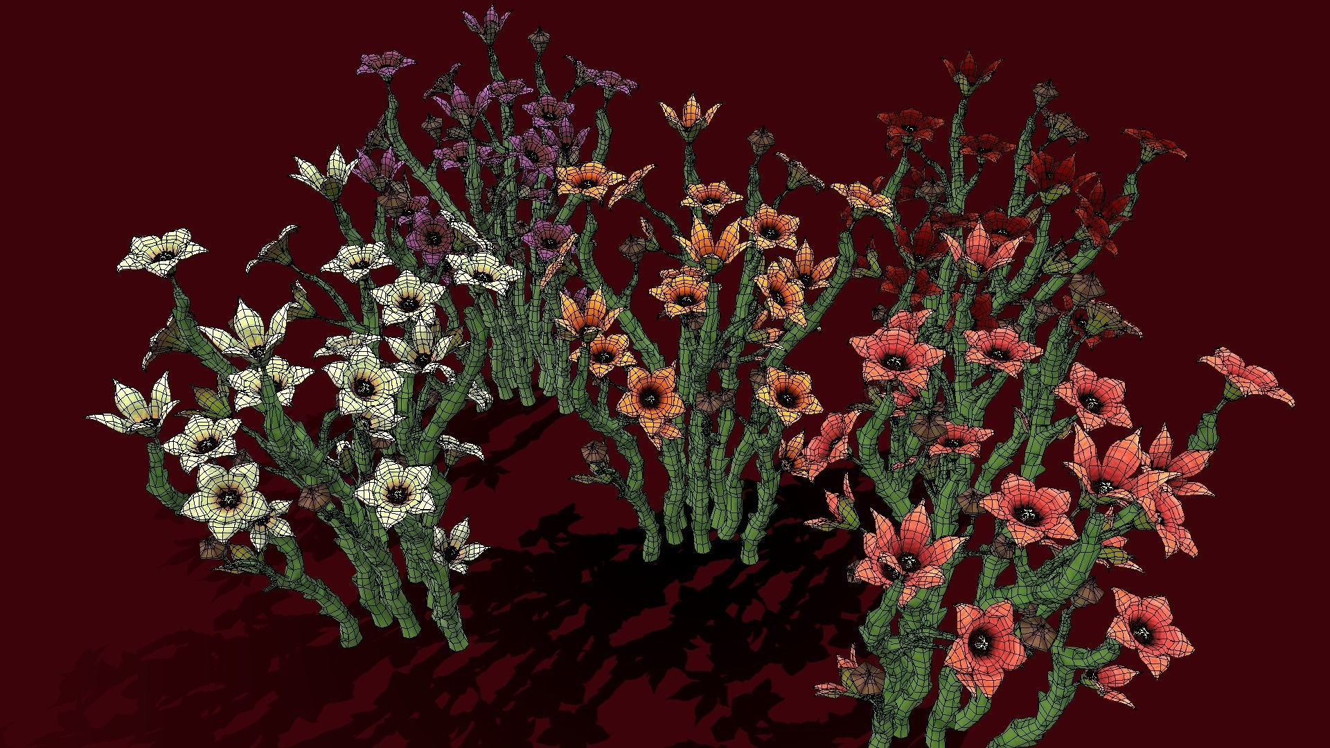 Flower Caralluma Socotrana