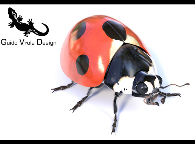 Accurate ladybug3D model