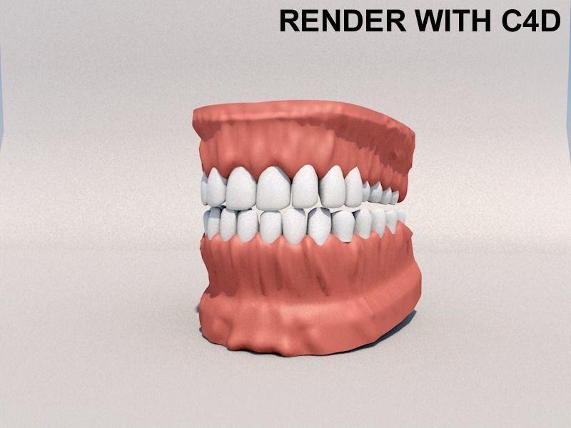 Human Mouth model 3D model