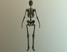 Bones 3D model