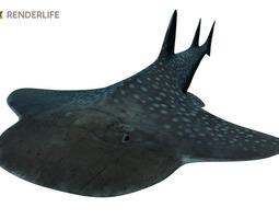 animated 3d angel shark with animation