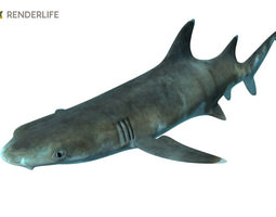reef shark with animations animated 3d model