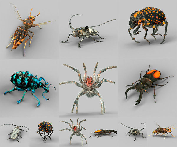insect collection vol 1 3d model low-poly obj 1