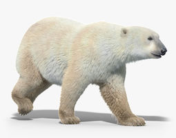 polar bear fur animated 3d model rigged animated max obj fbx