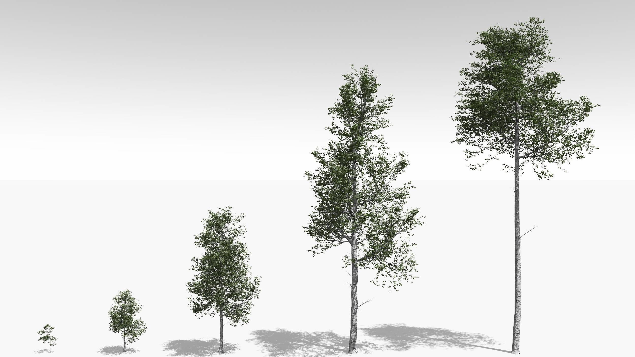 Quaking Aspen Model in Multiple Growth Stages