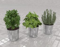 culinary herbs 3d