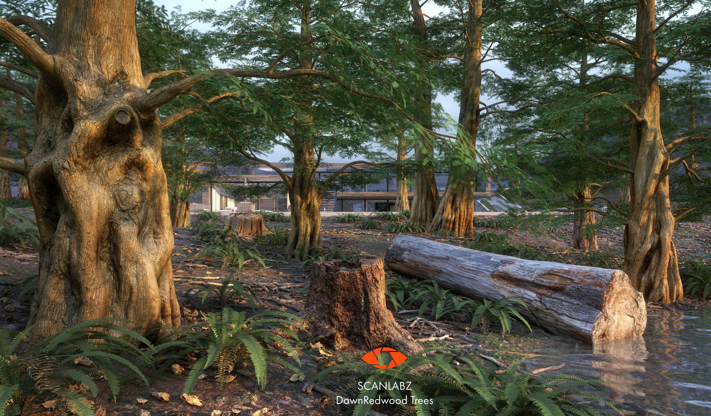 Trees Photoscanned Dawn Redwood Tree by Scanlabz