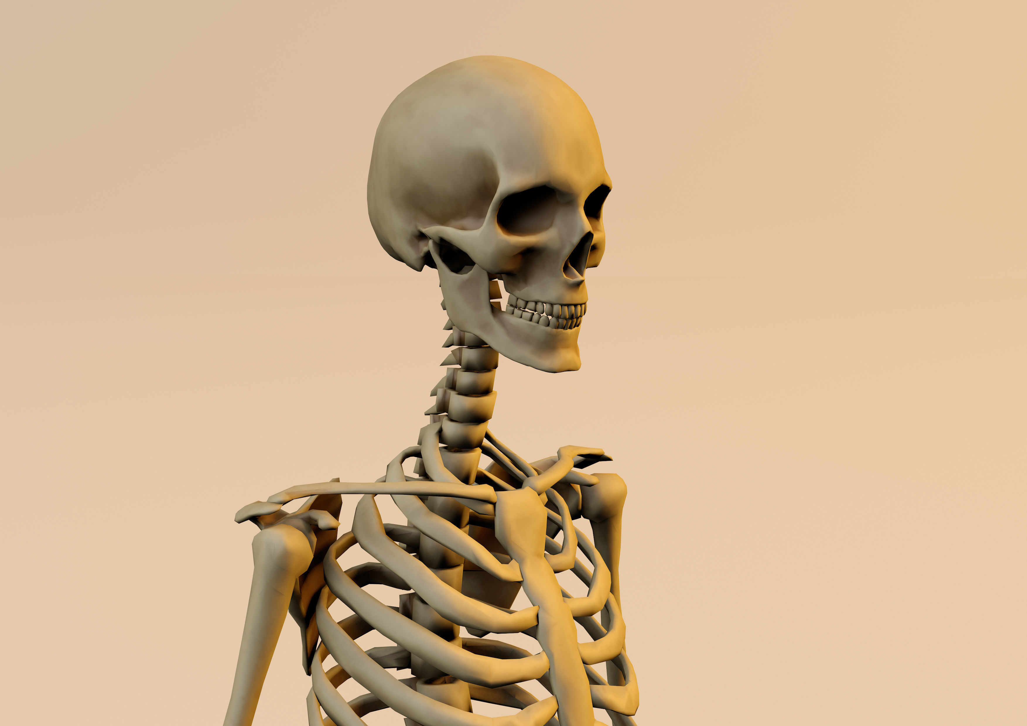 Anatomy skeleton model textured in substance painter