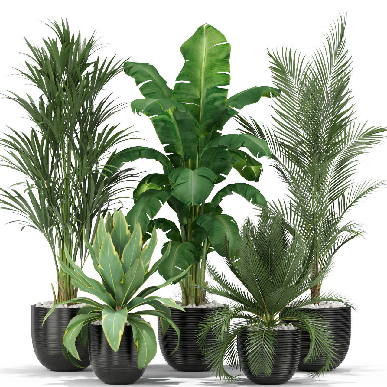 Plants collection 349
