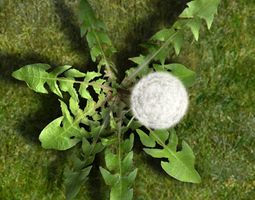 Dandelion animated 3D Model