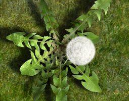 Dandelion animated 3D Model