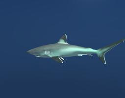 Silvertip Reef Shark 3D asset