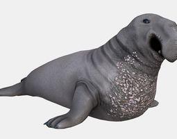 3D asset Elephant seal low poly