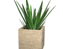 Aloe Vera - Potted Plant 3D
