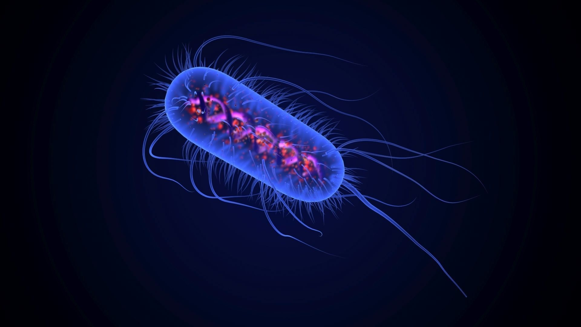 Escherichia Coli Bacteria with internal body parts