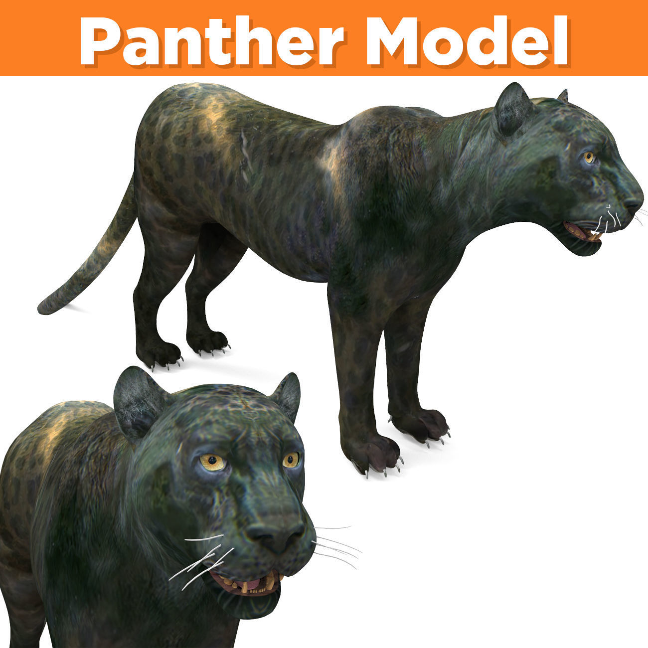 Panther 3D Models game ready low poly model