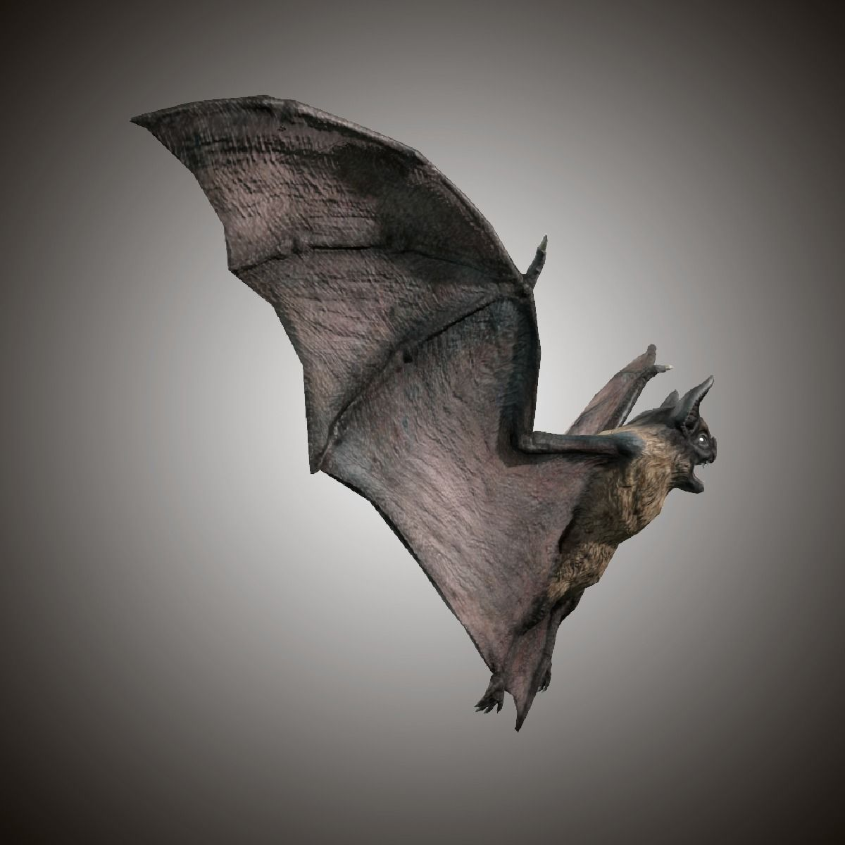 darkness yet bats Stefan greif and björn siemers from the max planck institute for ornithology have found that bats they hadn't yet search not exactly rocket science.