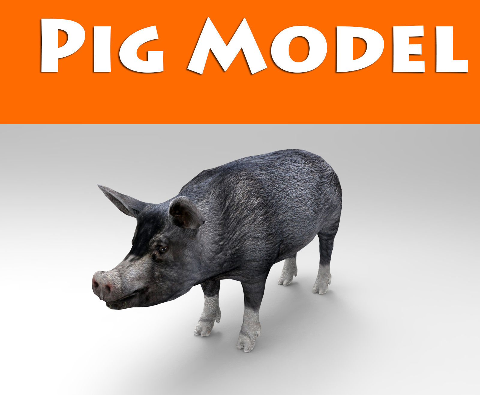 3D Black Wild Pig game ready low poly