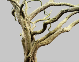 Huge Tree Environment Reference Asset 3D Model