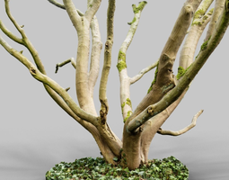 Realistic 3D scanned tree reference 3D Model