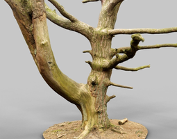 dancing tree photorealistic asset VR / AR ready