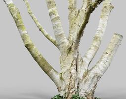 VR / AR ready paper tree 3d scan
