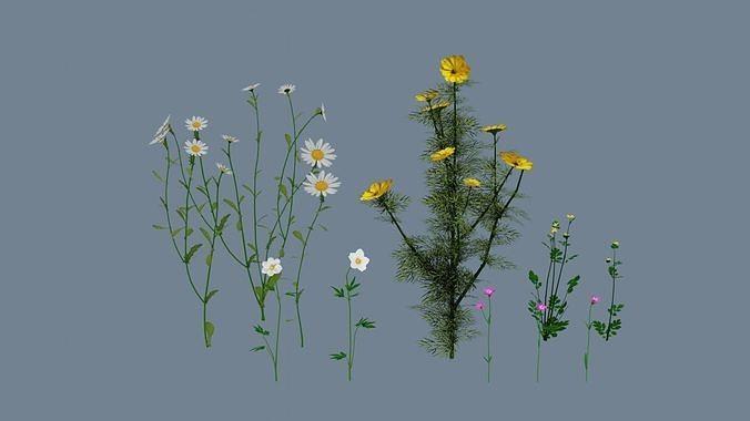 Wild flowers set