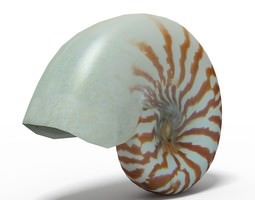 Seashell Nautilus 3D model