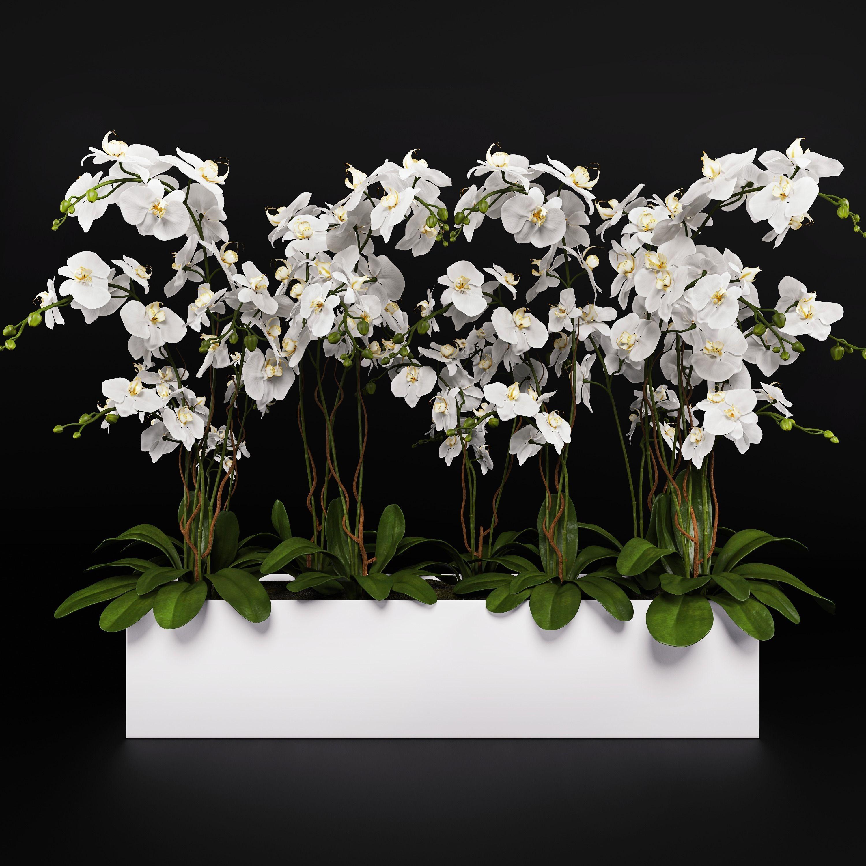 Orchid Arrangement 3