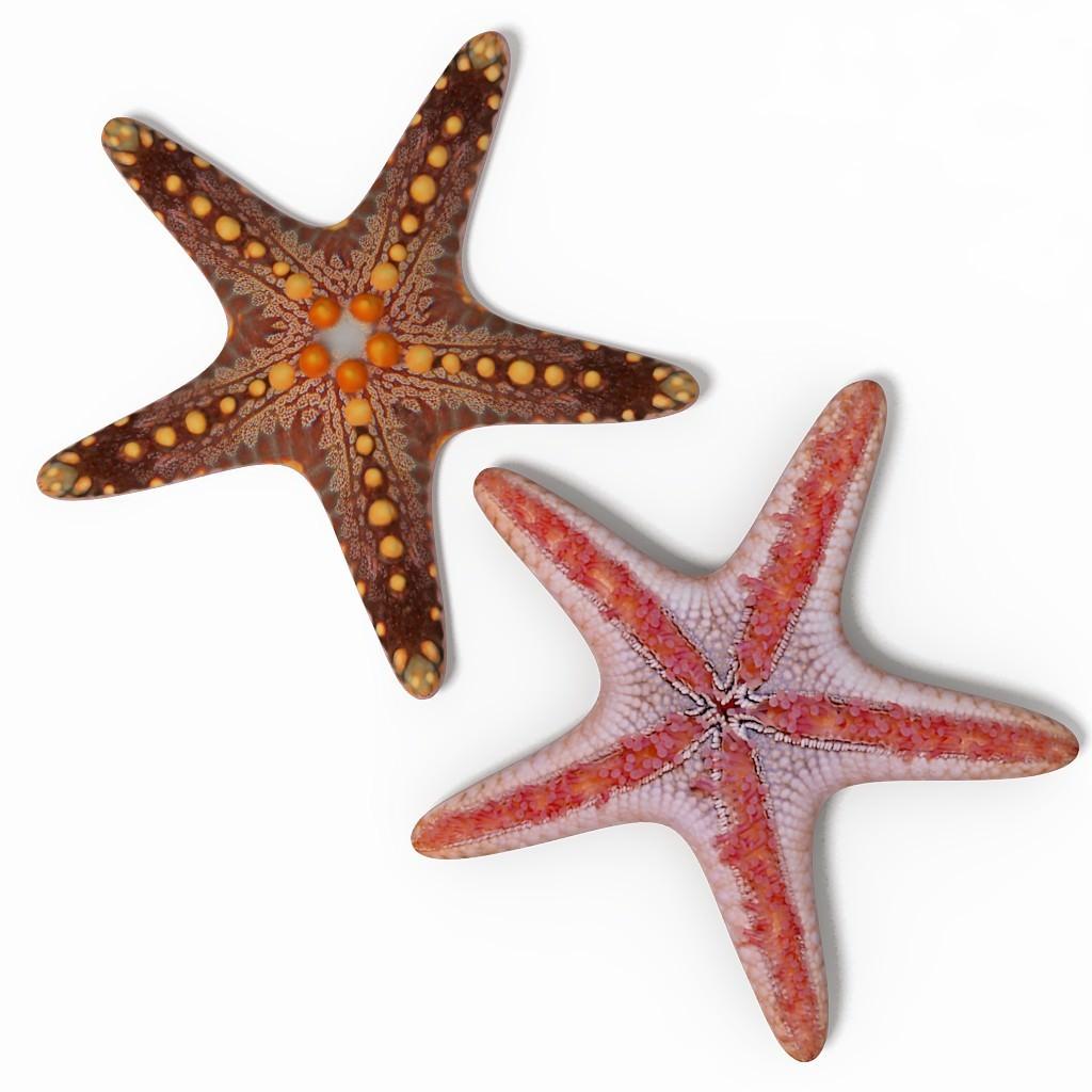 Starfish 3D Model .max...