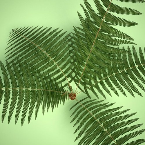 Ferns 3D Model .max .obj .3ds .c4d