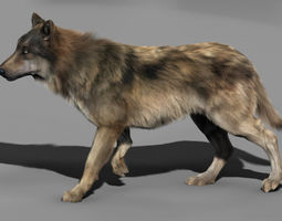 3D model rigged Wolf High Detailed