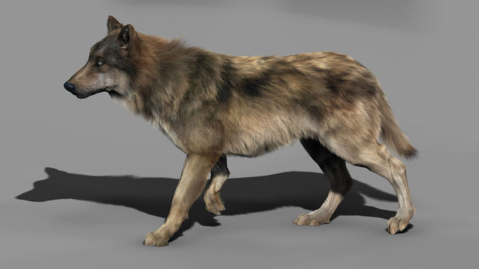 wolf high detailed 3d model rigged  1