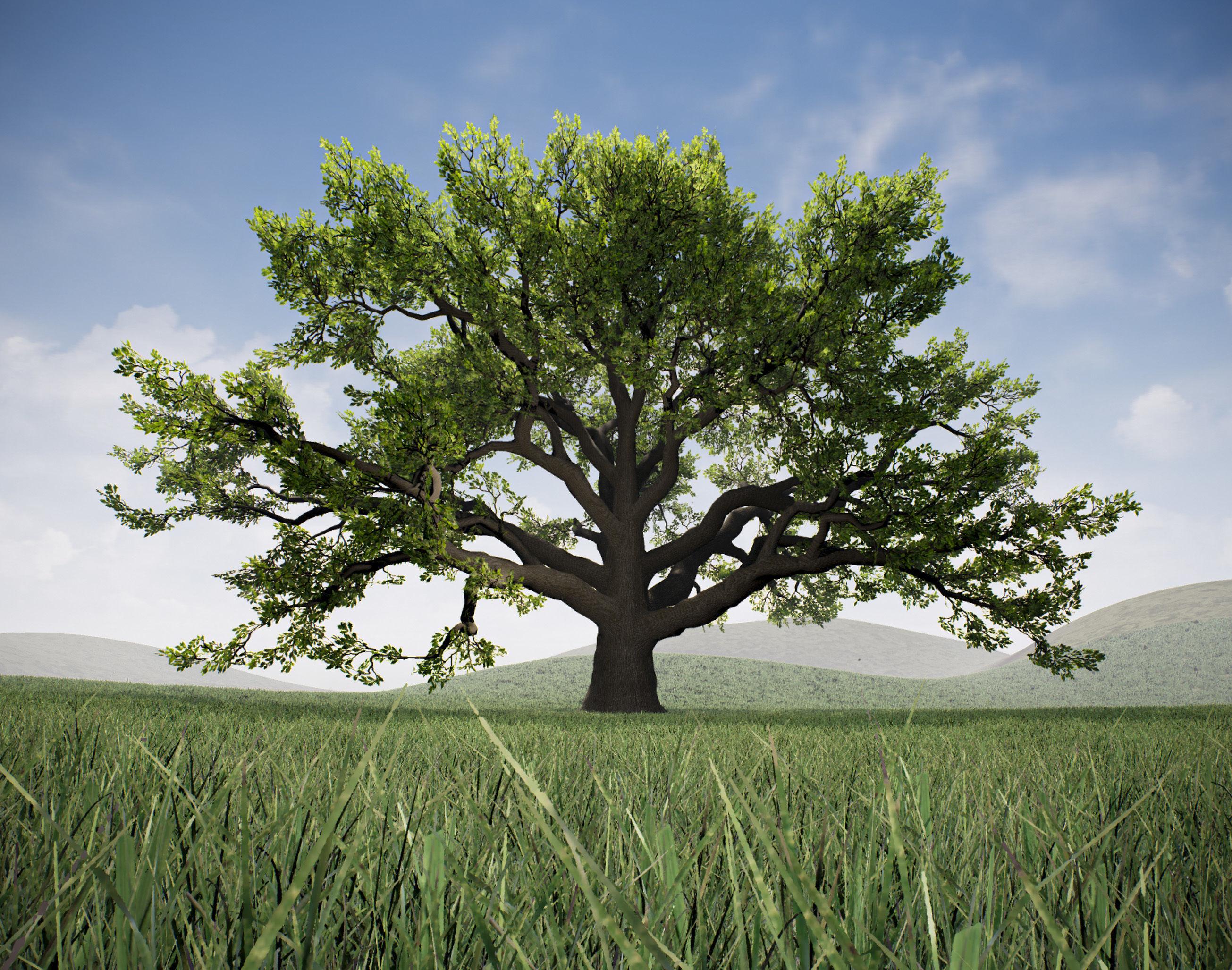 Realistic Broadleaf Oak Trees for games
