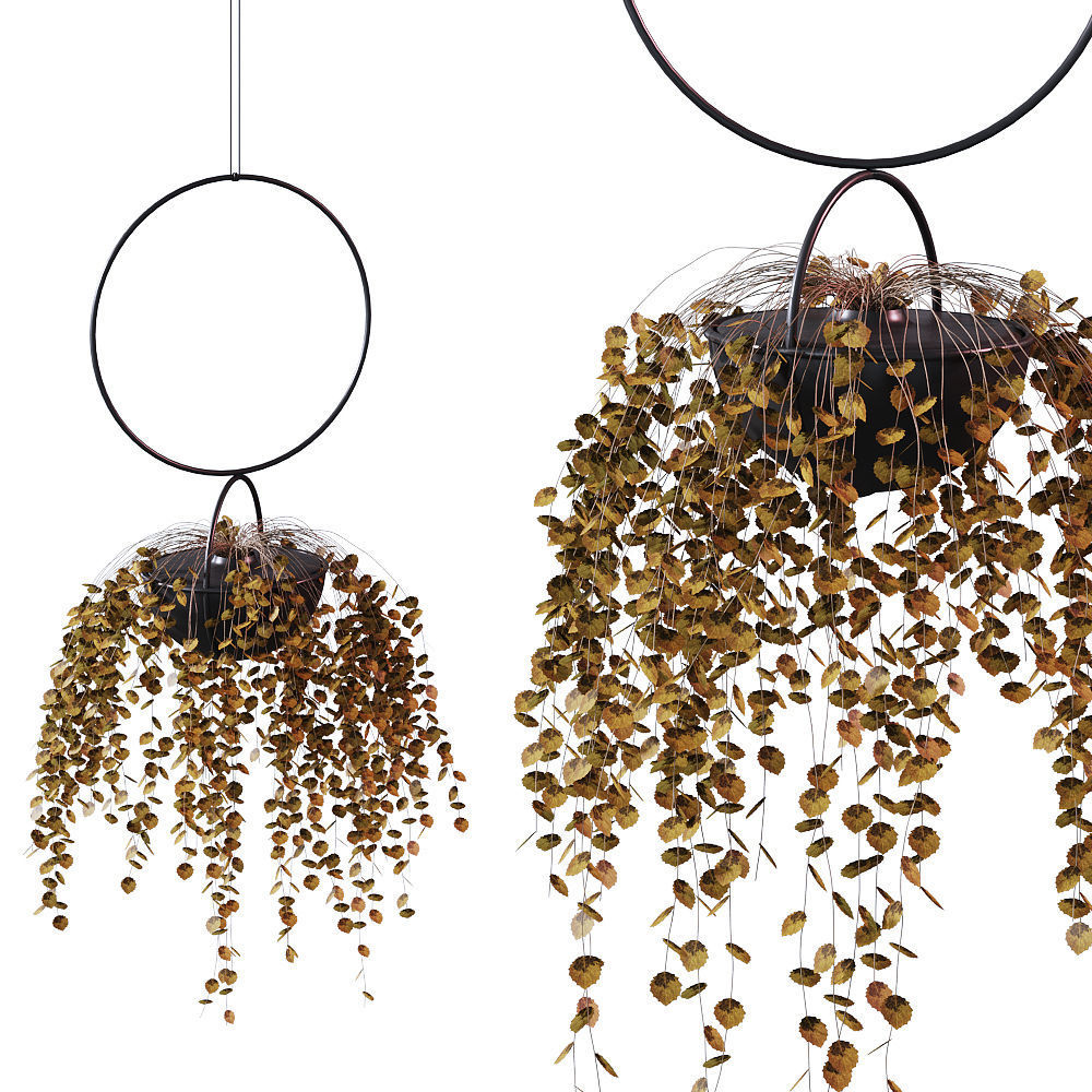 Plant in a hanging planter BLUMENKUGEL EDITION