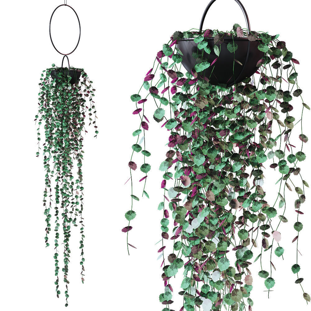 Plant in a hanging planter