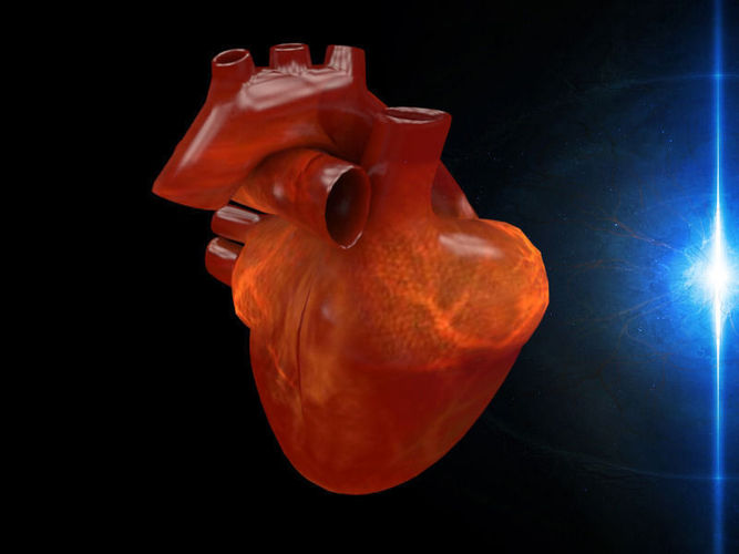 3d human heart 3d model max fbx dae 1