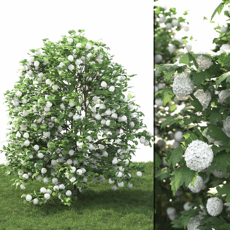 Viburnum guelder-rose