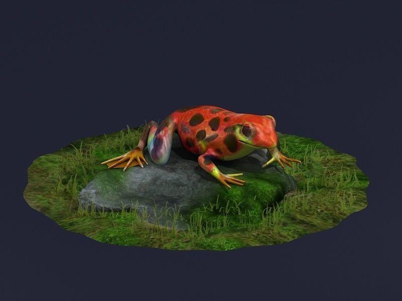 Jungle frogs  poison dart frogs  rainforest frogs Amphibians