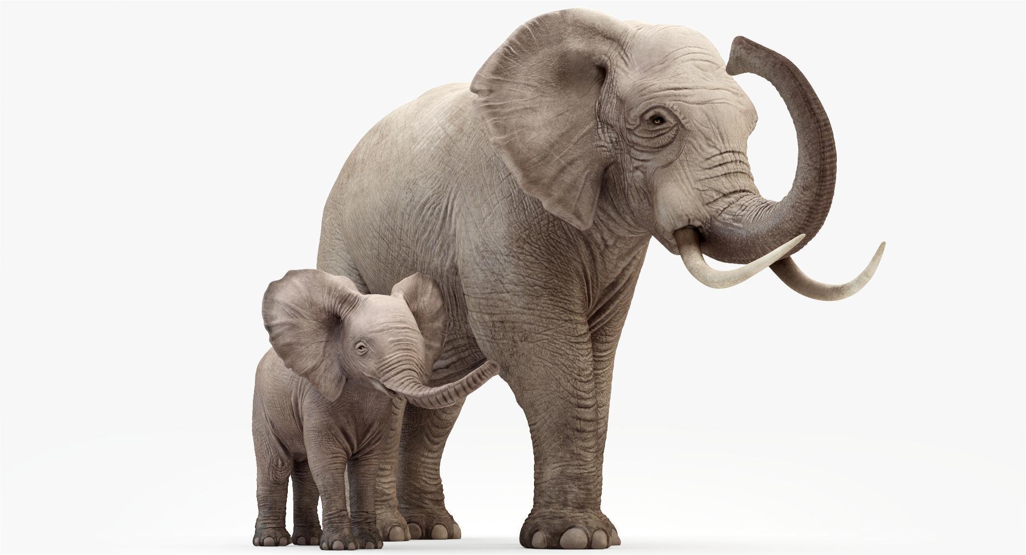 Elephant and Baby Elephant Animated 8K