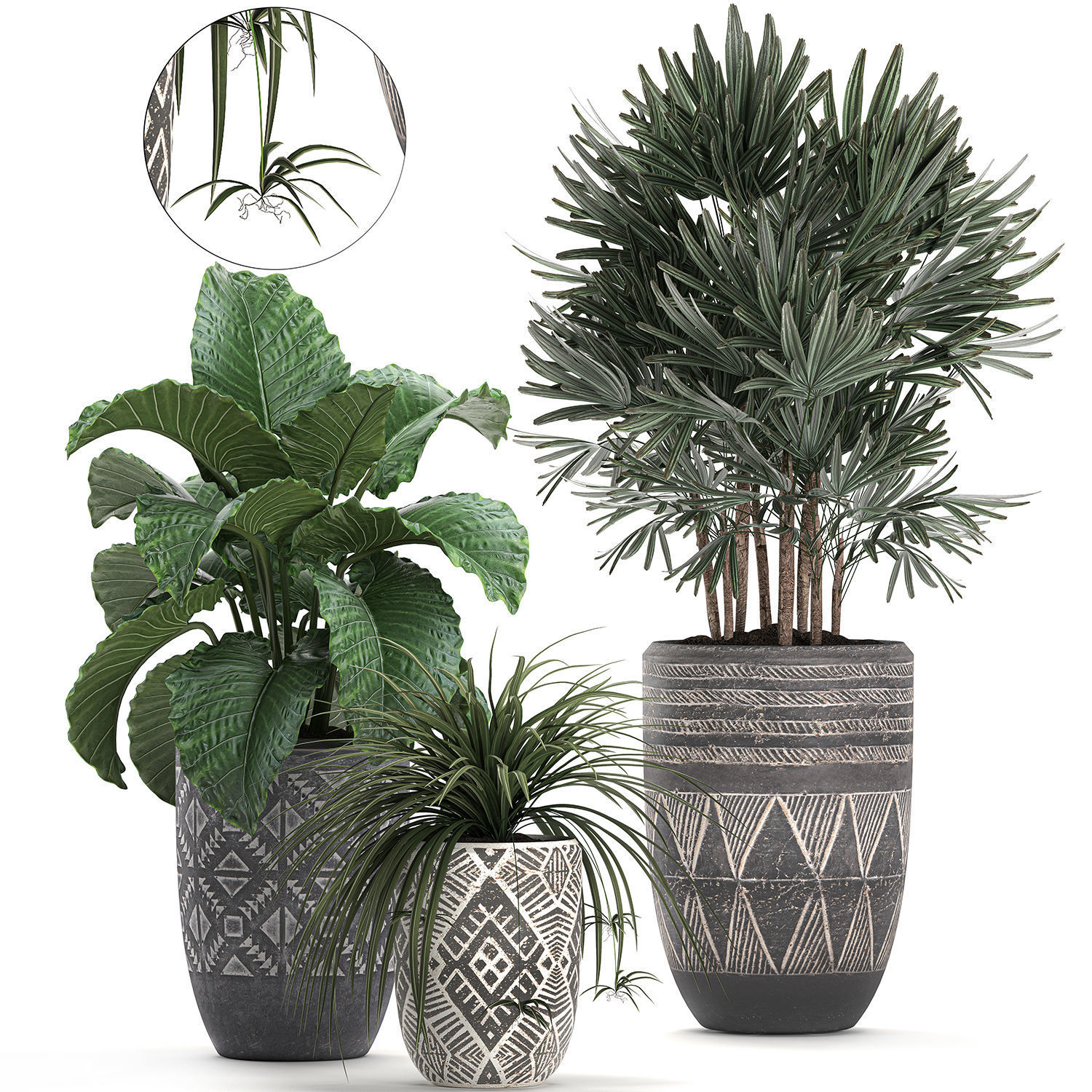 Houseplants in a pot for the interior 703
