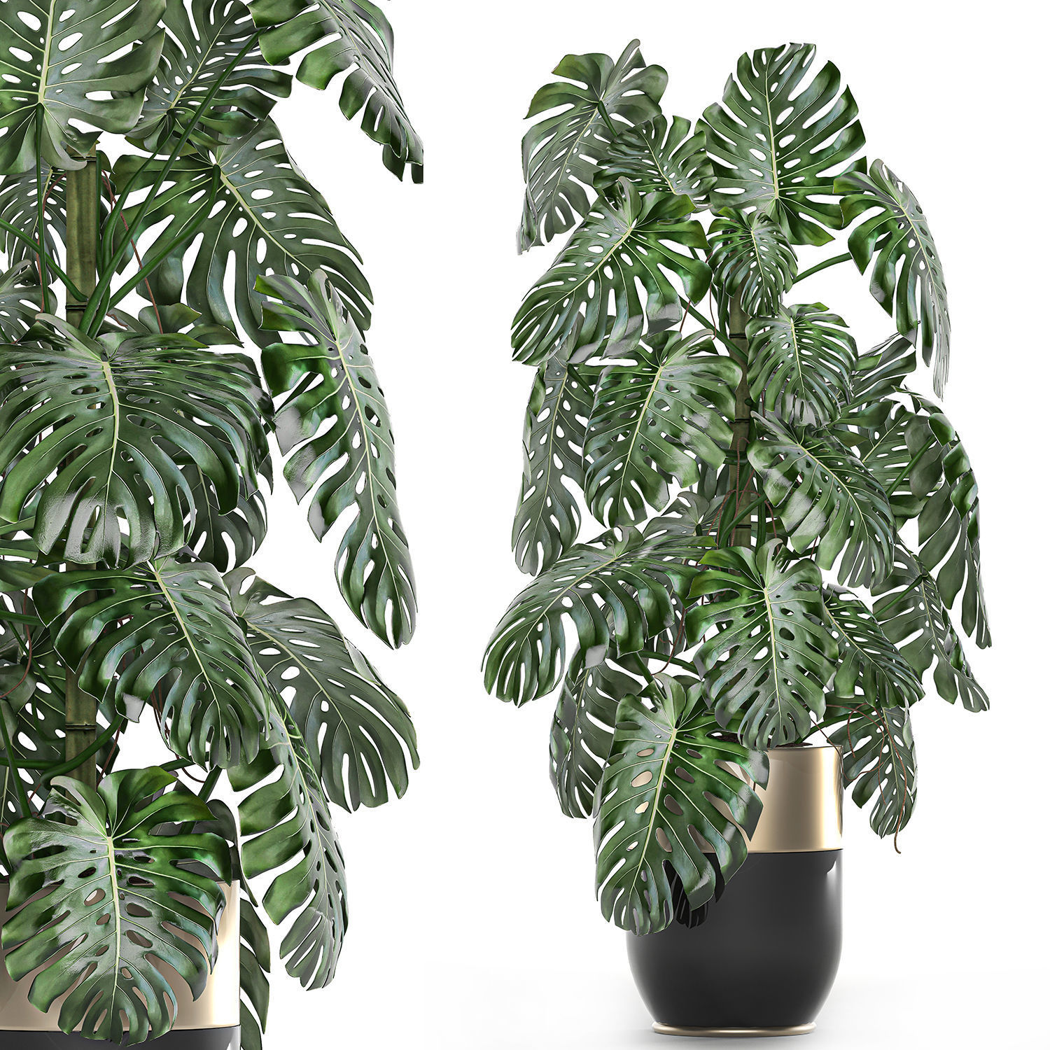 Monstera in a pot for the interior 708
