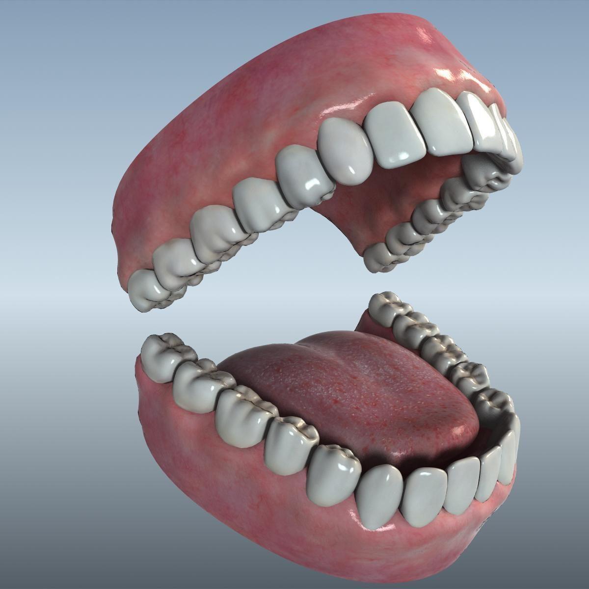 Mouth Teeth Tongue