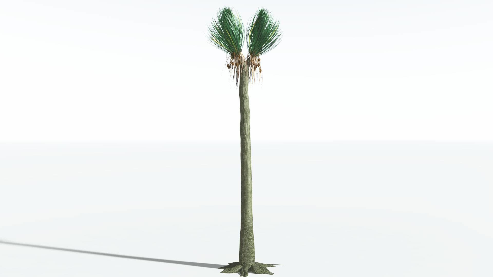 EVERYPlant Ovate Sigillaria SINGLE --1 Model--