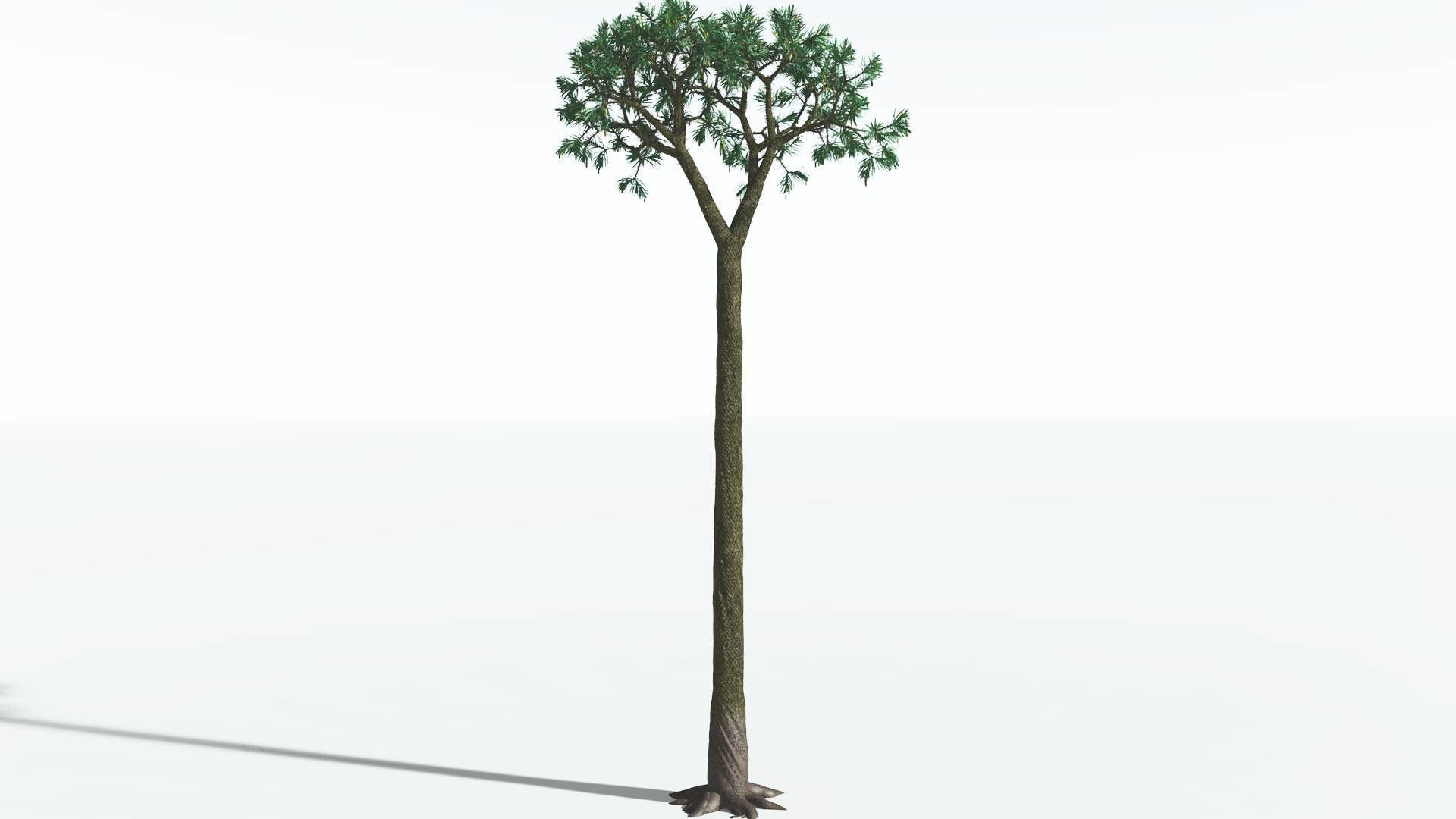 EVERYPlant Spiny Scale Tree SINGLE --1 Model--