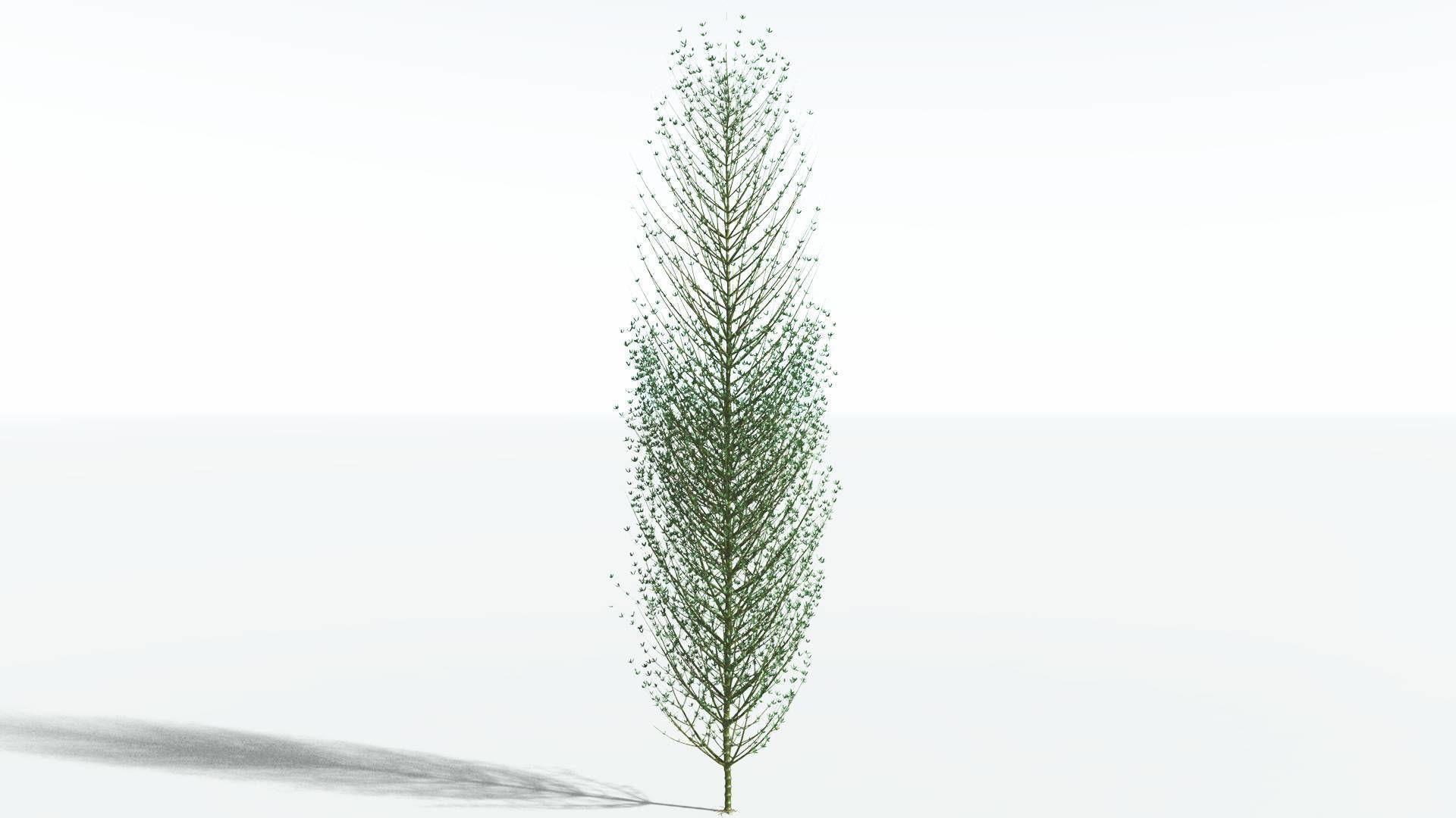 EVERYPlant Twisted Horsetail Tree SINGLE --1 Model--